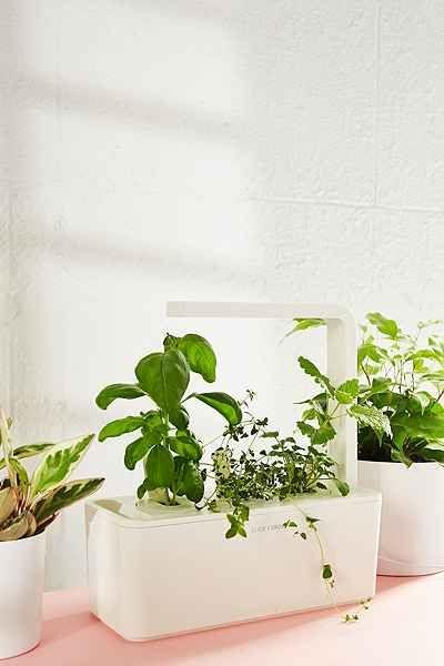 Click Grow Smart Herb Garden Starter Kit Urban 640 x 480