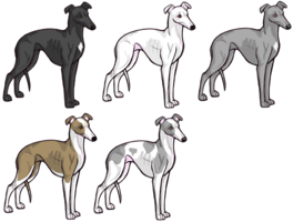 Deviantart More Like Cartoon Whippet By Lotusdogz Whippet Dog Art Greyhound Art