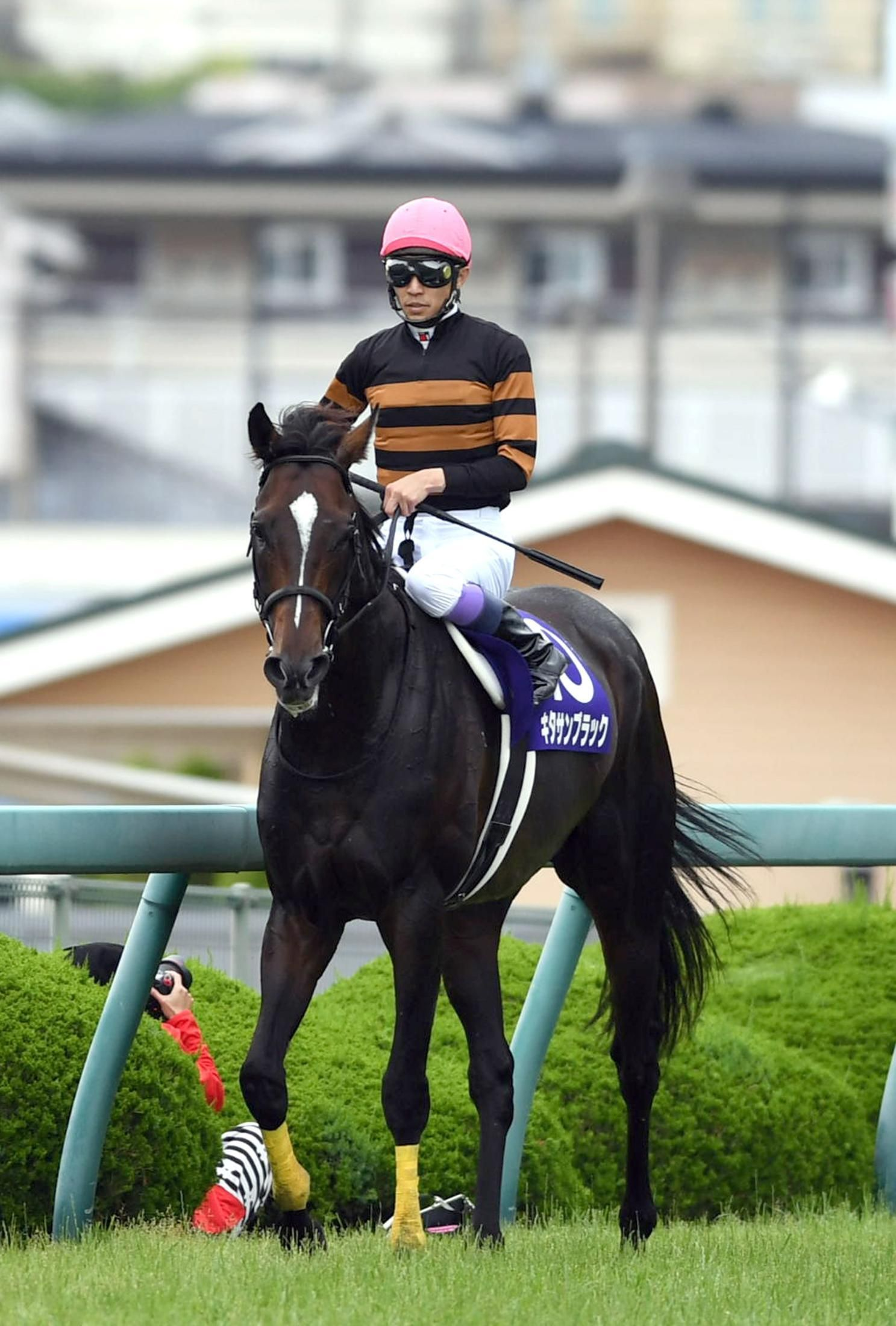 高塚記念競馬とキタサンブラックの壁紙