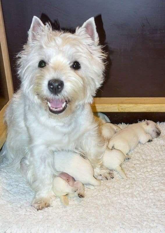 Pin von Barbara rathmanner auf hundemami mit puppies
