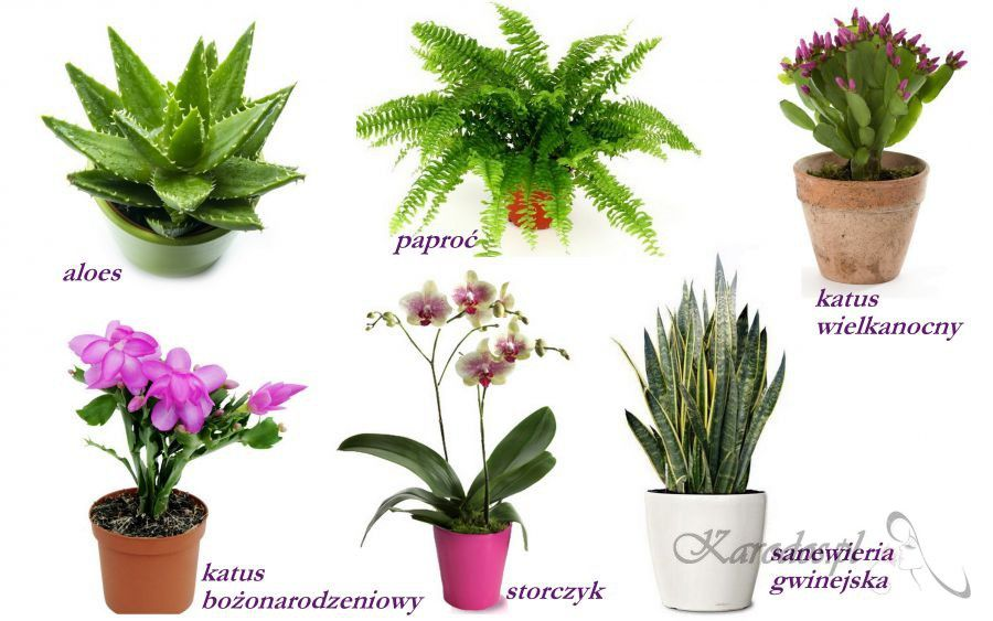 Rosliny Polecane Do Sypialni Kwiaty Rośliny Miejskie