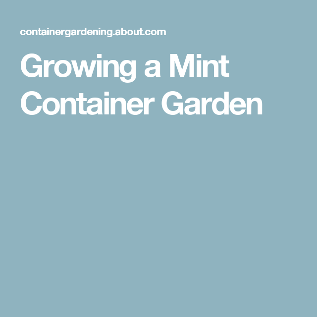 Growing a Mint Container Garden