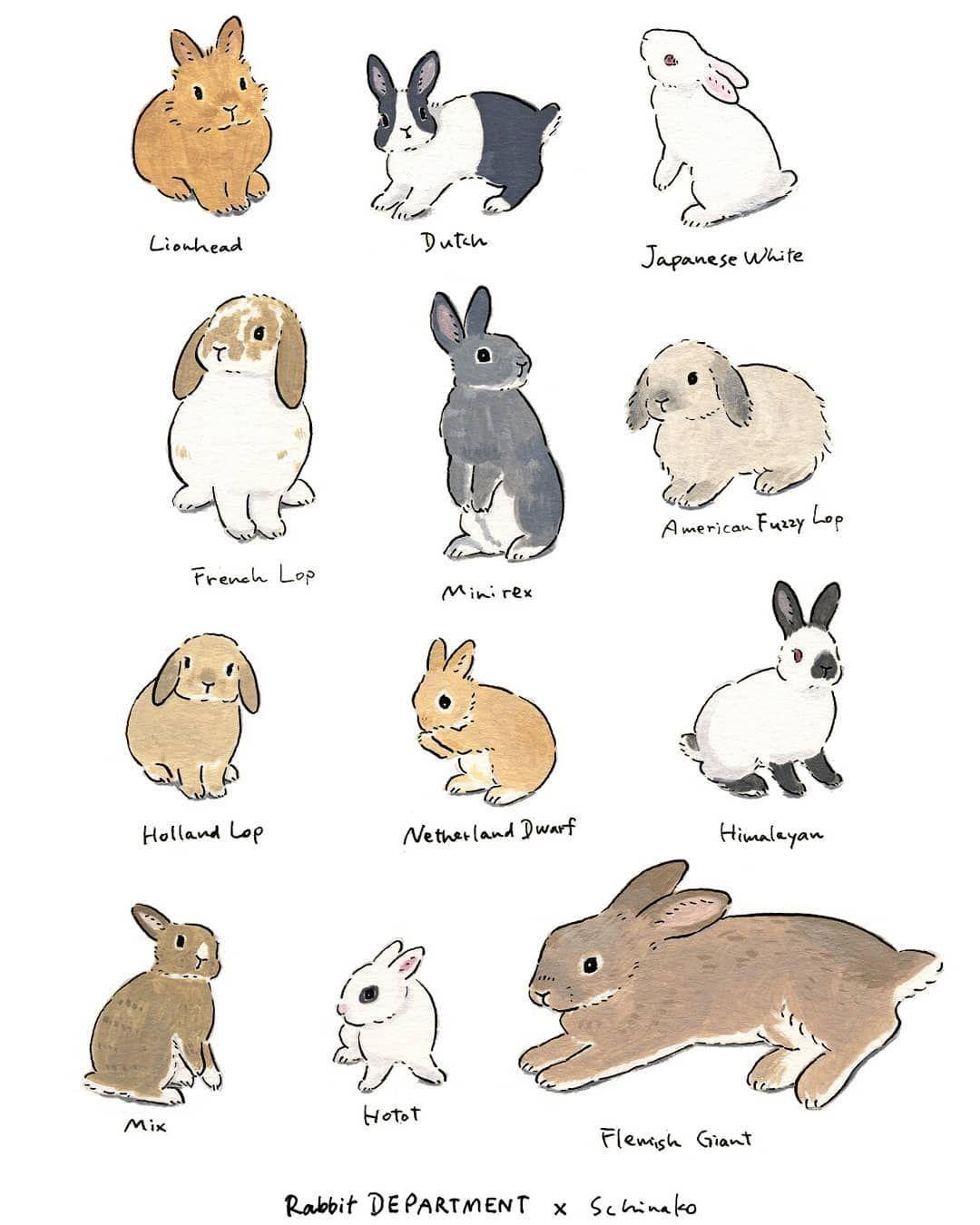 Acrylic Paint By Schinako Moriyama Bunny Art Bunny