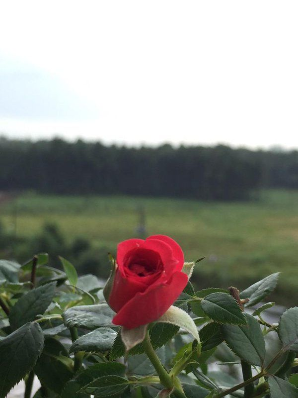 #FLOWERS #Rose #Roses #RED (Soiurce: Media Tweets by ♥さくらこ身長150※体重36リプ遅し (@sakuracute0077) | Twitter |  18 Sept 2015