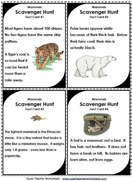 Scavenger hunts make learning about animal classifications fun ...