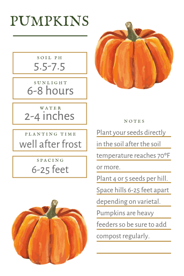Everything You Need To Know To Grow Pumpkins Growing Pumpkins Planting Pumpkin Seeds Planting Pumpkins