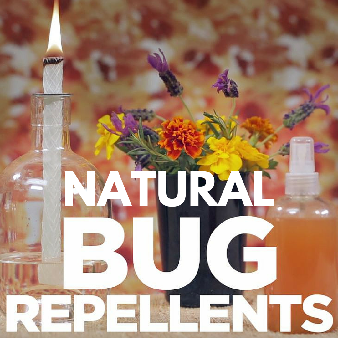 3 diy natural bug repellents u003e u003e https www facebook com hgtv
