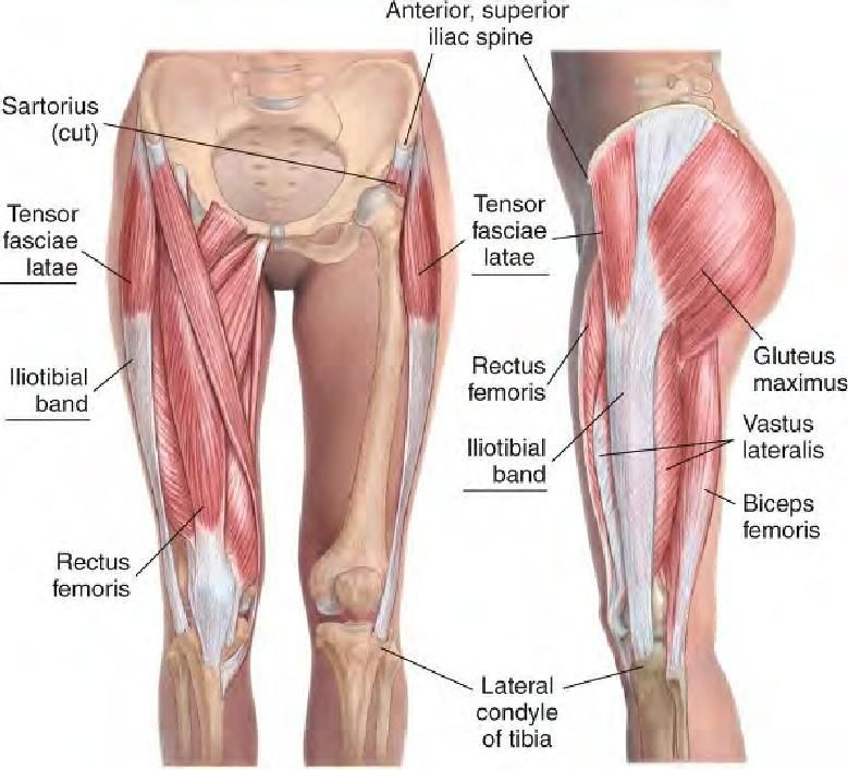 Tensor Fasciae Latae And Iliotibial Band These Tend To Tighten Up