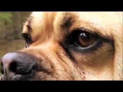 Dogs 101 Puggle Love My Payeton Dogs 101 Dogs Pug Love