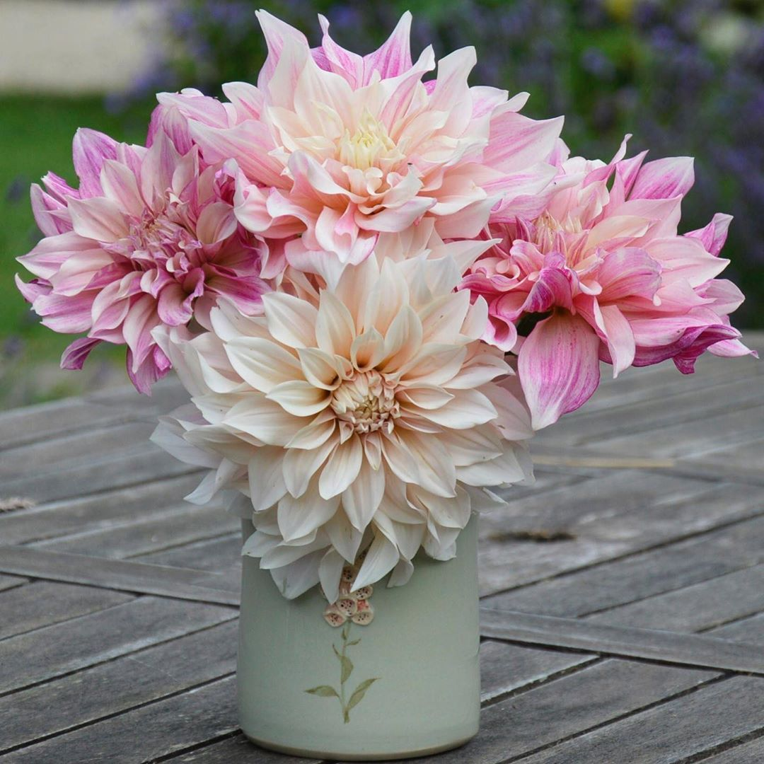 Day 4 Mygardenthismonth Fav Flower Dahlias Oh How Much I Love Dahlias Look At Them Aren T They Gorgeous Just Before We Go On Holidays I Always Dea Garten