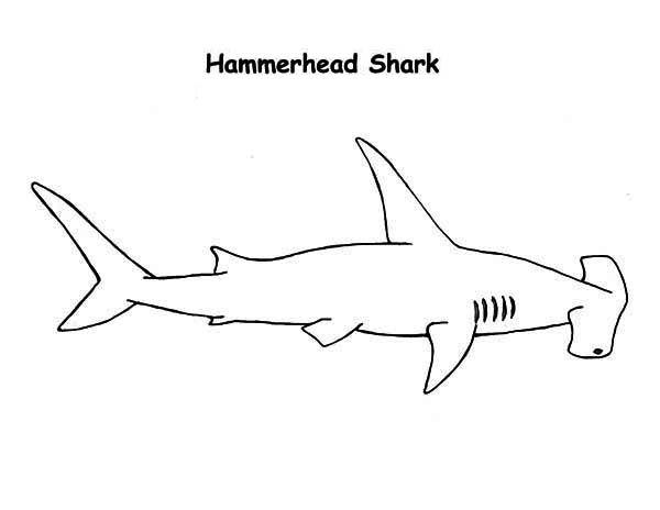 A Realistic Drawing Of Hammerhead Shark Coloring Page Kids Play Color In 2020 Shark Coloring Pages Realistic Drawings Shark Drawing
