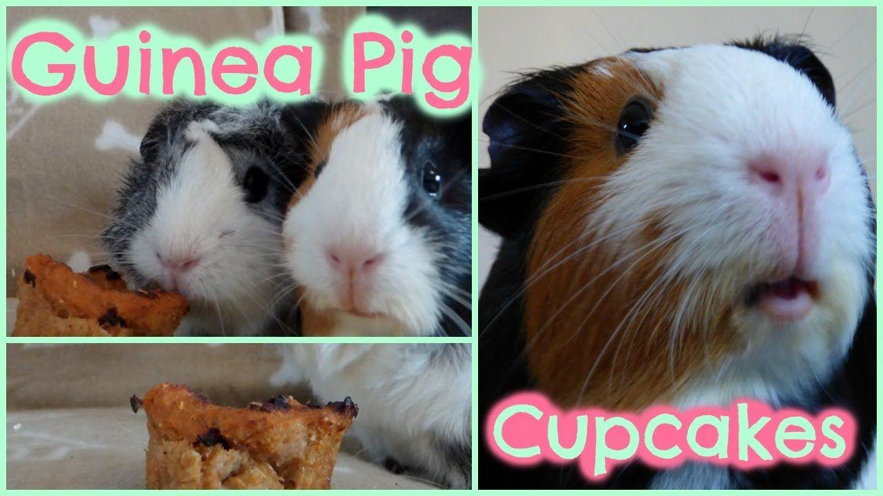 Diy Guinea Pig Treats Cupcakes Guinea Pigs Pinterest Baby