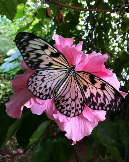"Butterfly Lovers 🦋🌈 on Instagram: ""❤️❤️❤️"""