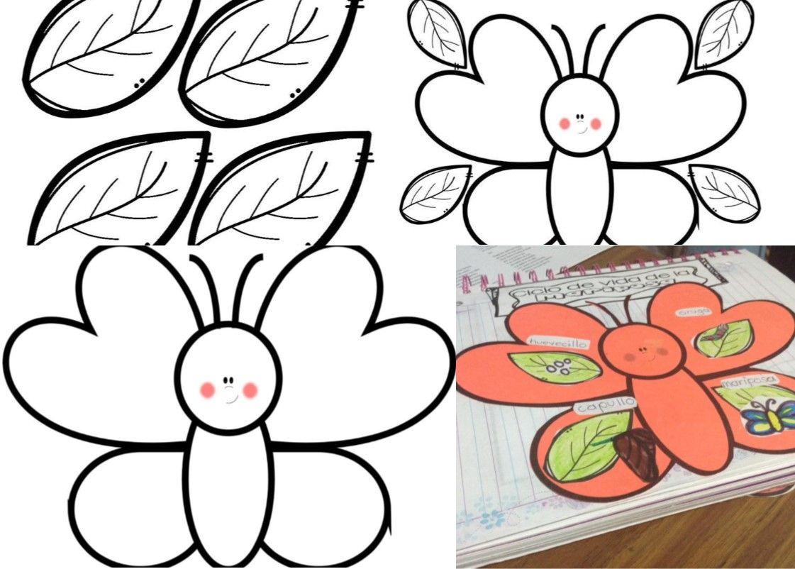 Estupendo interactivo del ciclo de vida de la mariposa   Ciclo de ...