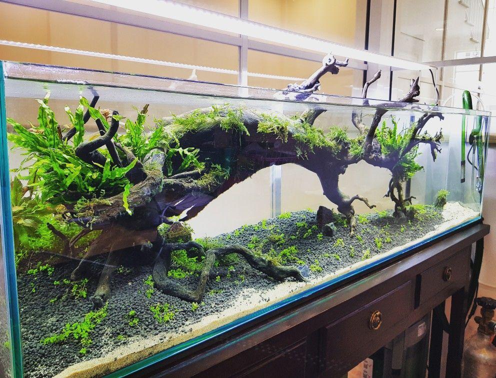 21 Best Aquascaping Design Ideas To Decor Your Aquarium Tips