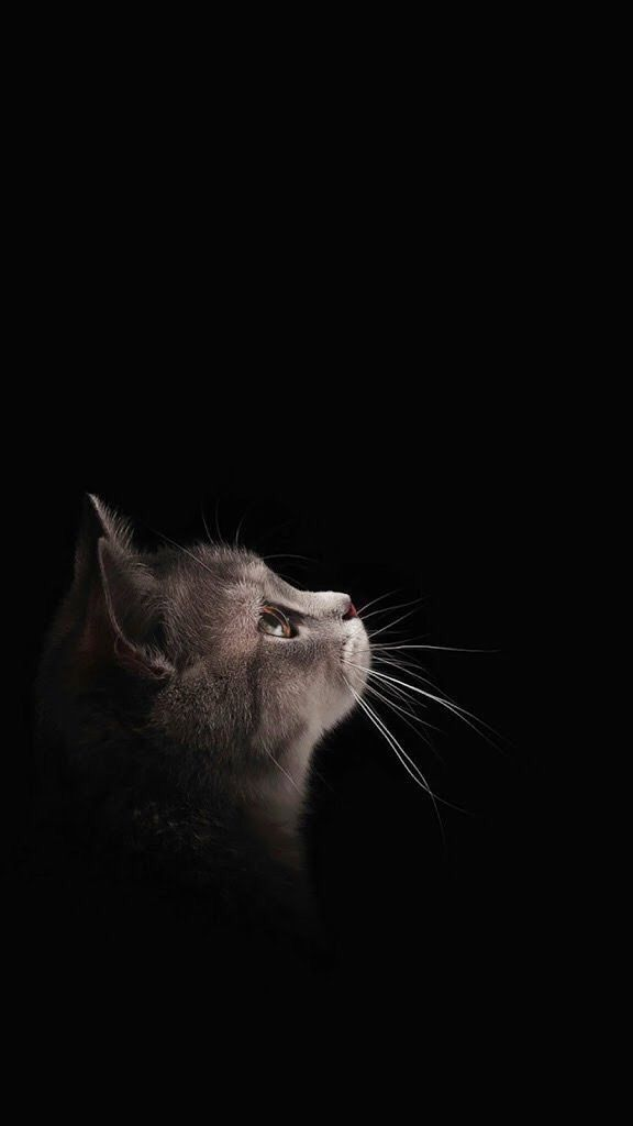 Get the New of Black Wallpaper Cat for Sony xPeria This Month from Uploaded by user