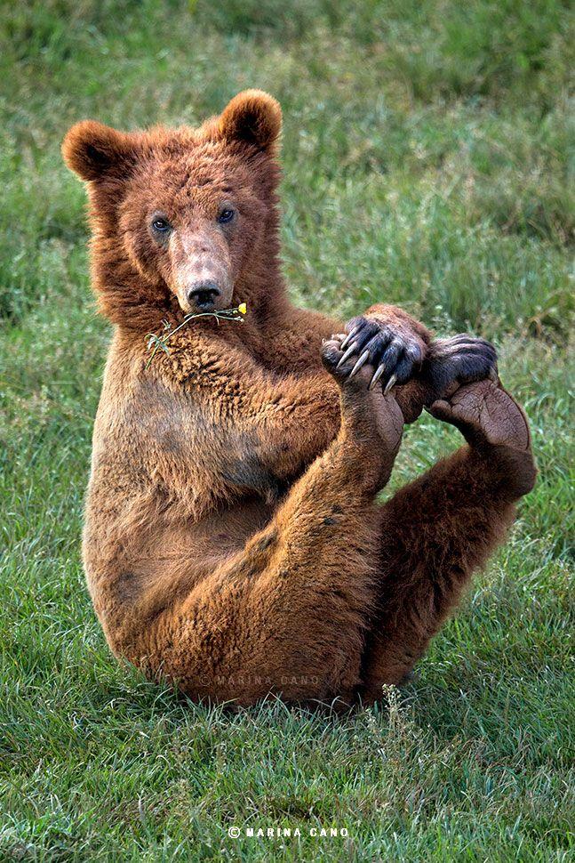 Дачи, прикол с медведем картинка