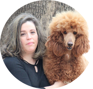Apricot Cream Standard Poodles And Poodle Puppies For Sale Family Affair Standards Poodle Puppies For Sale Poodle Puppies For Sale