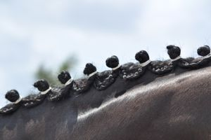 Pro Equine Grooms Groom S Class Recap Wef Week 12 Horse Hair Hair Accessories Equines