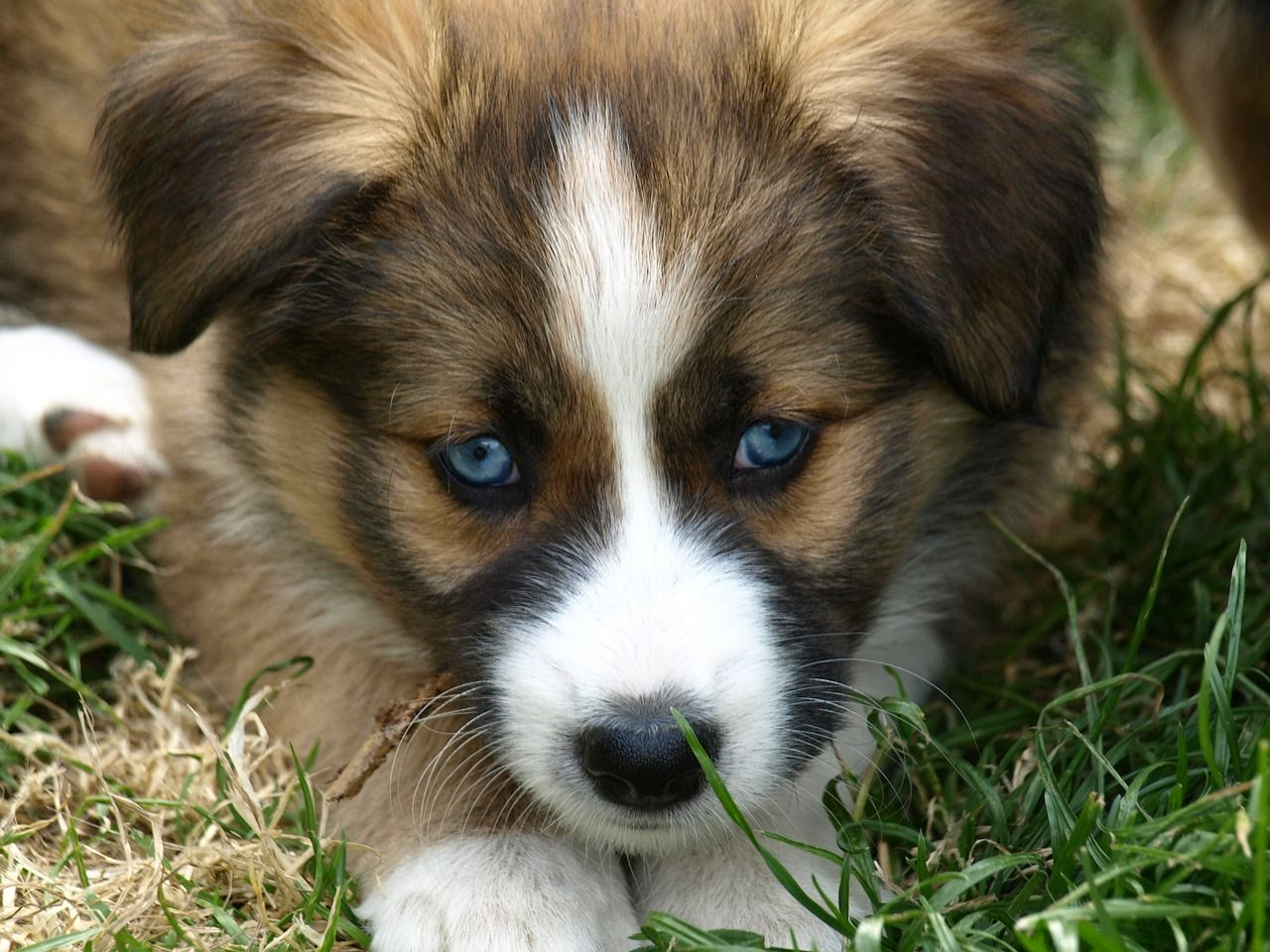 Gail's Story Panhandle Pup Baby animal names, Girl and