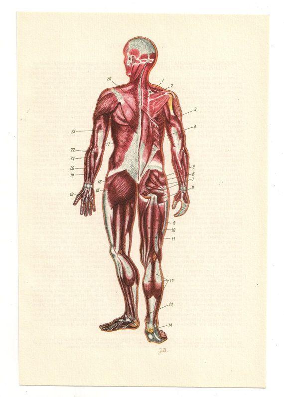 2 Vintage Anatomical Prints Baby Pregnant Medical Diagrams Skull