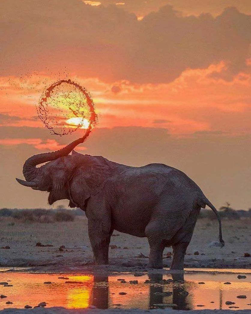 Animals •~• elephant