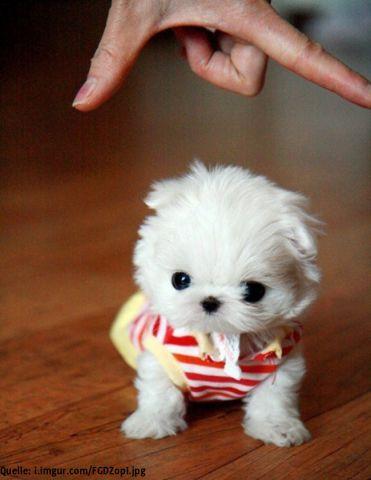 Coole Stories Buzzerstar Com Super Susse Hunde Babys Die Winzigsten Hundewelpen Klein Und Super Niedlich Susse Hunde Hunde Welpen Babytiere