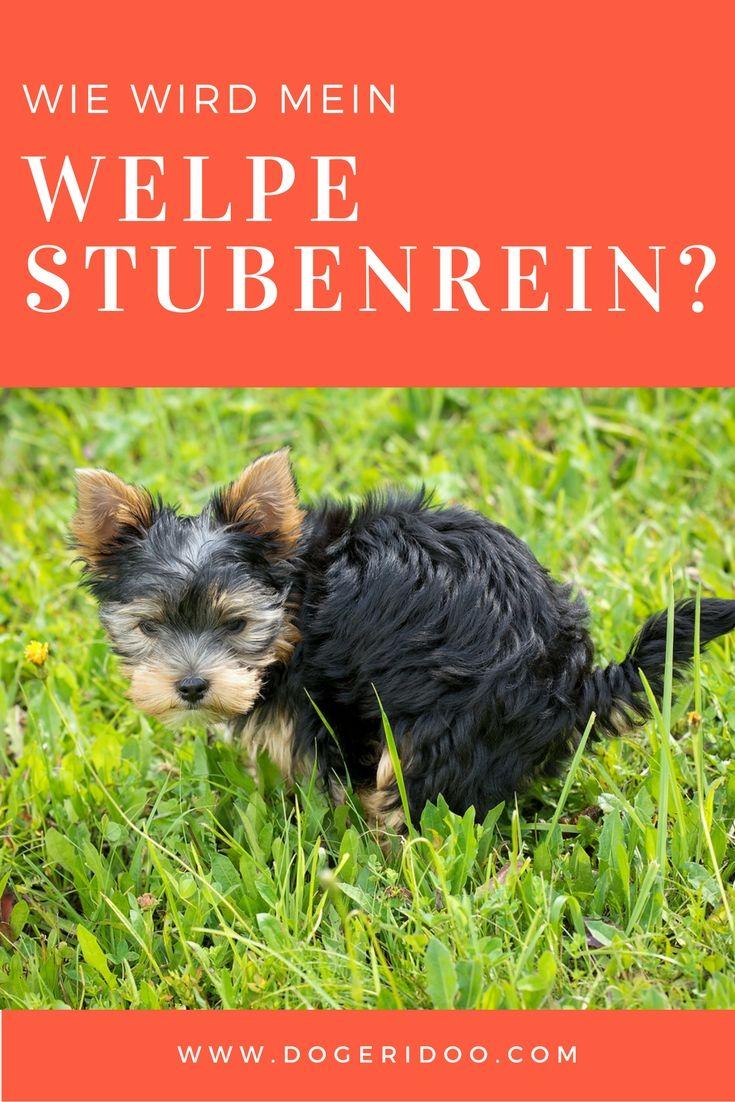 Wie Wird Mein Hund Stubenrein Martin Rütter