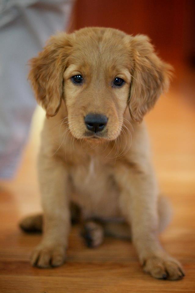 cutie pie!!