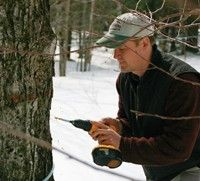 Farming Magazine - Developing New Tapping Guidelines for Maple - December, 2012 - SUGARING