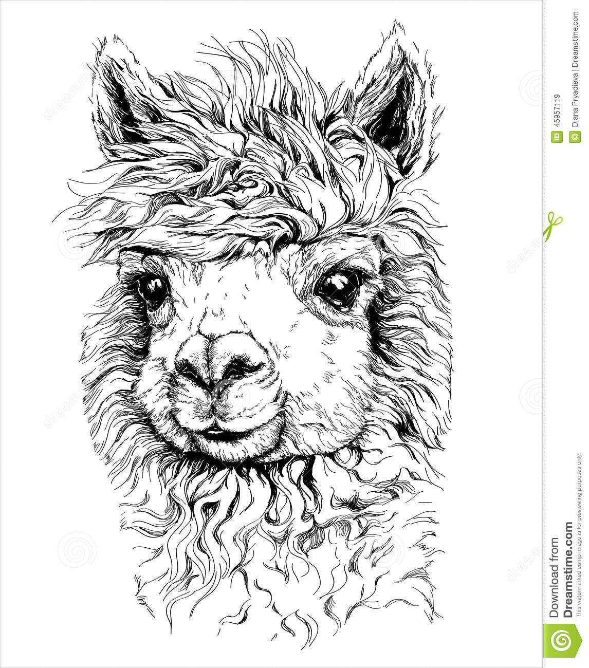 alpaca tekening  google zoeken  gifts for alpaca lovers