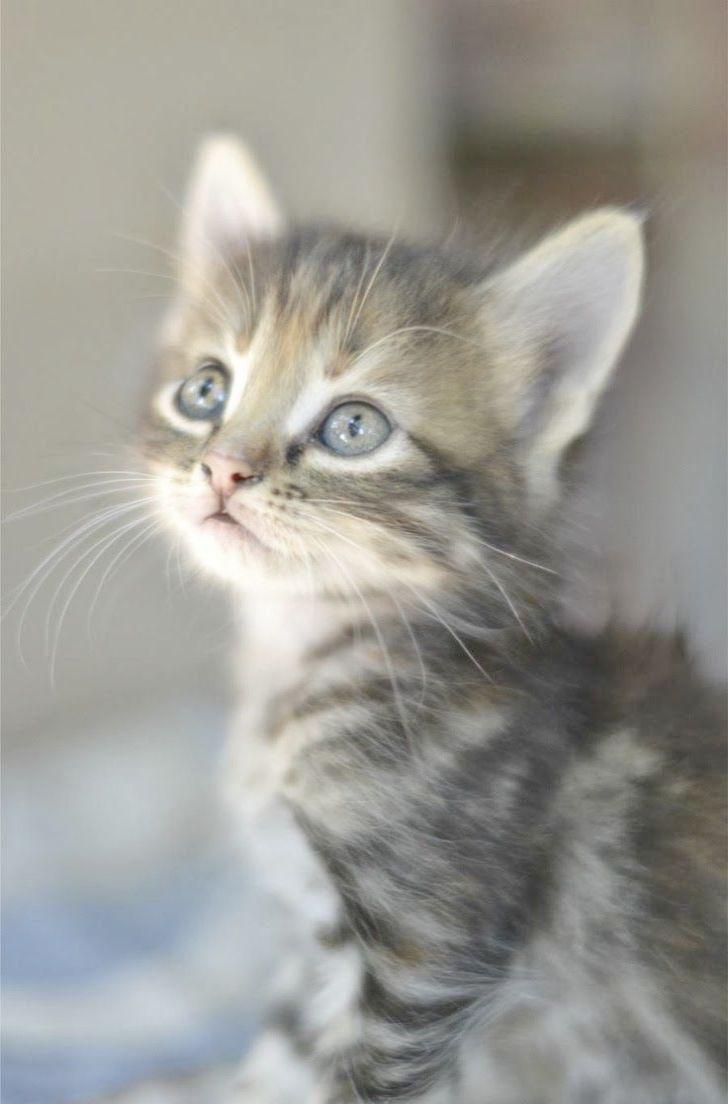 Cute Kittens Ears Cute Cats Dancing Cute Animals Cats And Kittens