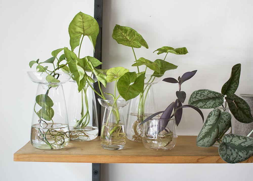 vase aqua culture pour plantes et bulbes sans terre kinto via nat et nature plantes suspendues. Black Bedroom Furniture Sets. Home Design Ideas
