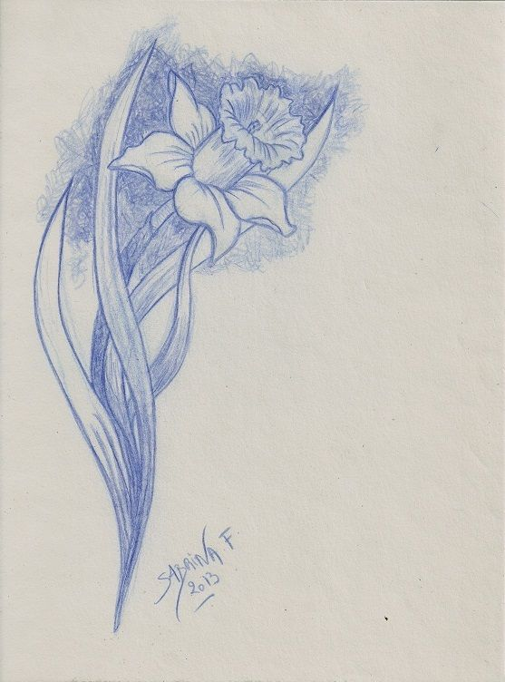 Dessin jonquille r alis e la mine bleue 2013 flower draw sabrina f drawings by sabrina - Dessin jonquille ...