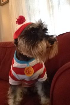 Puppy Time Image By Sara Hood Repins On Schnauzer Babies 2 Pet Costumes Poor Dog