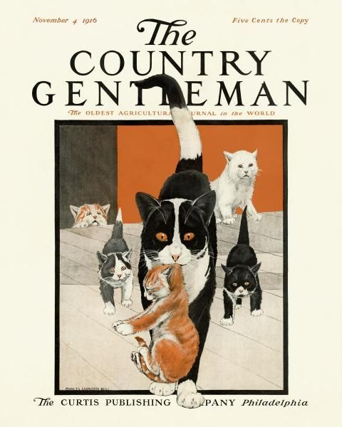 Kittens With Mother The Country Gentleman Magazine 4