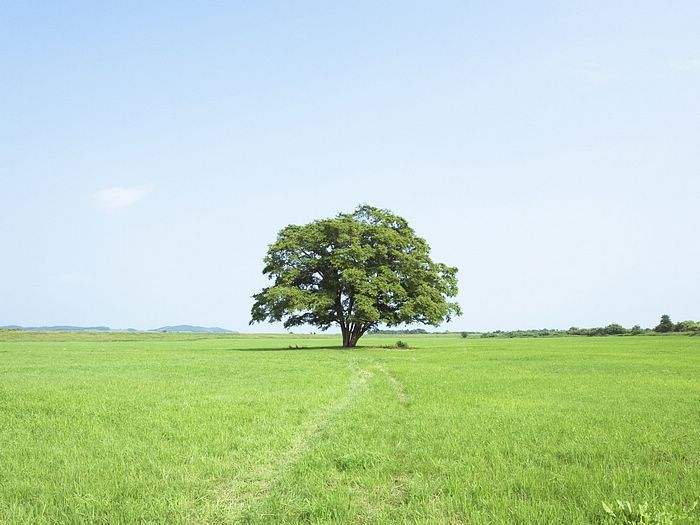 I love a single tree out in the middle of nowhere..