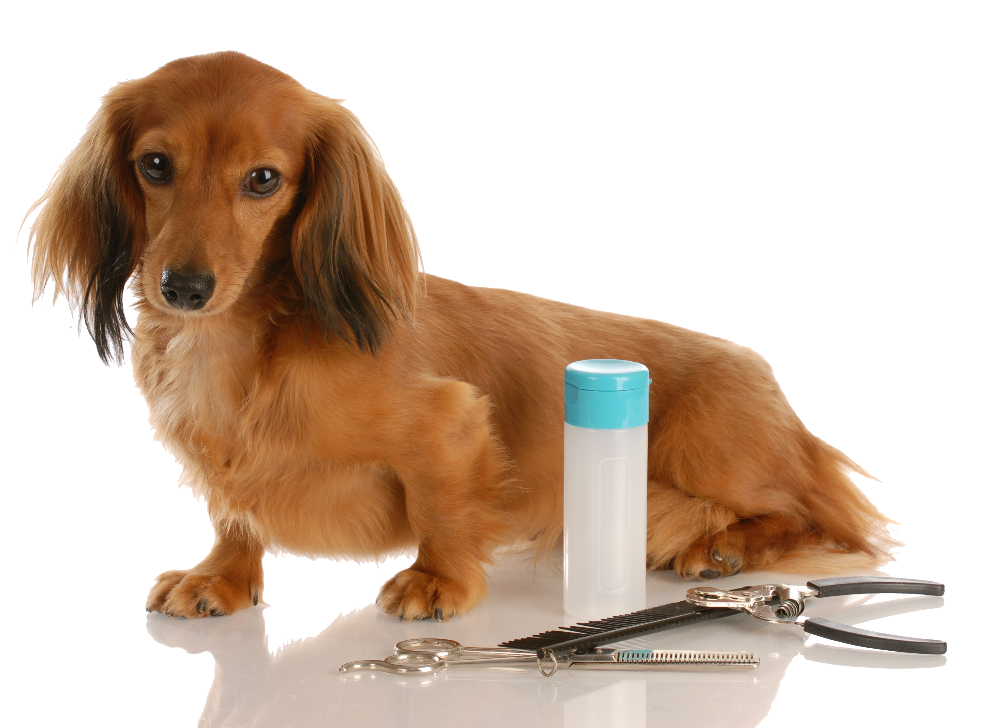 Top Dog Kennel Provides Private Indoor And Outdoor Runs Optional Playtime And Daily Walks Quiet Stress Free Dog Grooming Pet Grooming Long Haired Dachshund