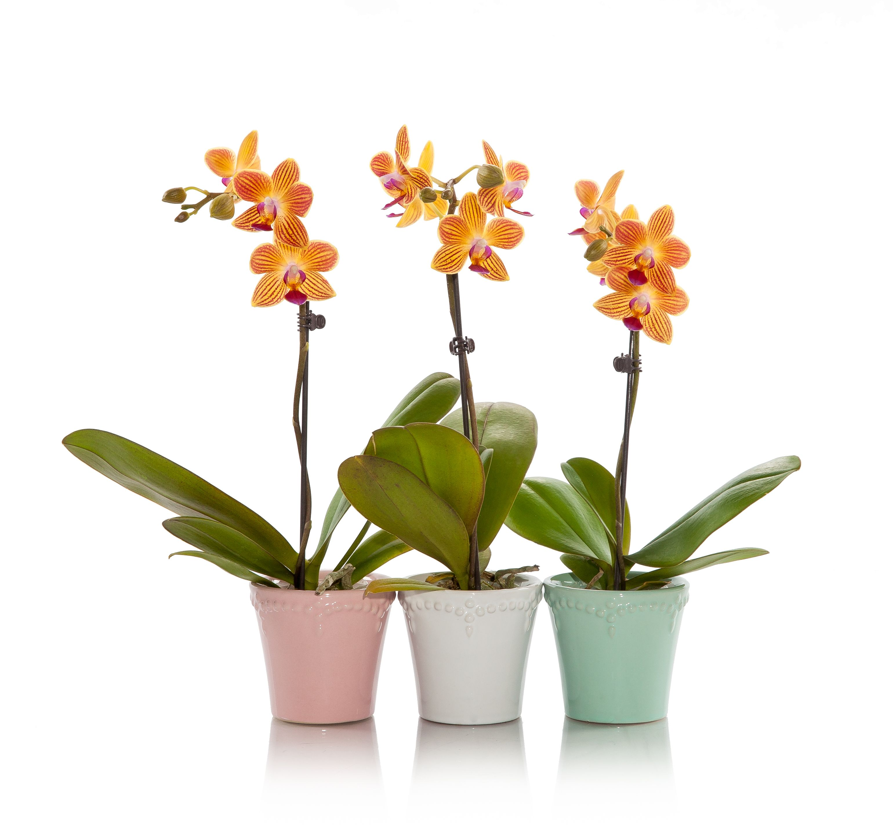 3 Ways To Use Mini Orchids For Your Next Sorority Event
