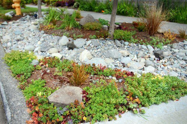Gardening In The Planting Strip Ecoyards Landscaping With Rocks Side Garden Lawn Renovation