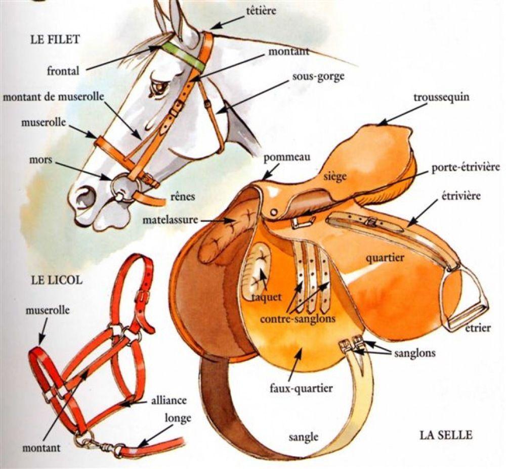 partie de la selle du cheval