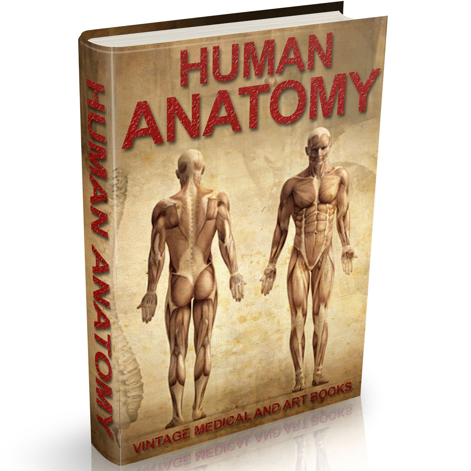 Human Anatomy Books on DVD Old-Medical - Art - Greys Anatomy ...