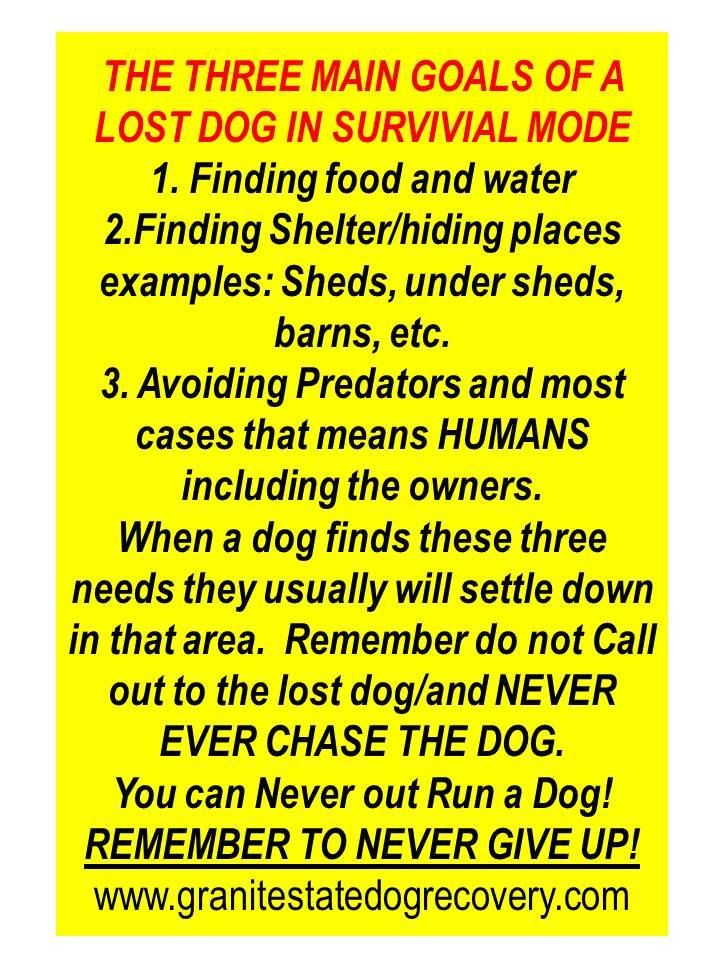 Did You Know That When A Lost Pet Goes Into Survival Mode They Are Only Really Concerned About Three Things 1 Food And Wa Losing A Dog Losing A Pet Pet Hacks