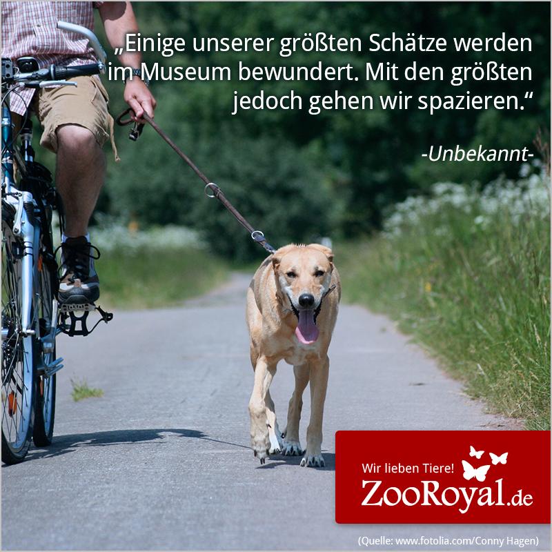 Wie wahr! ♥  #hund #hunde #museum #schatz #schätze #gassi #spazieren #gassigehen
