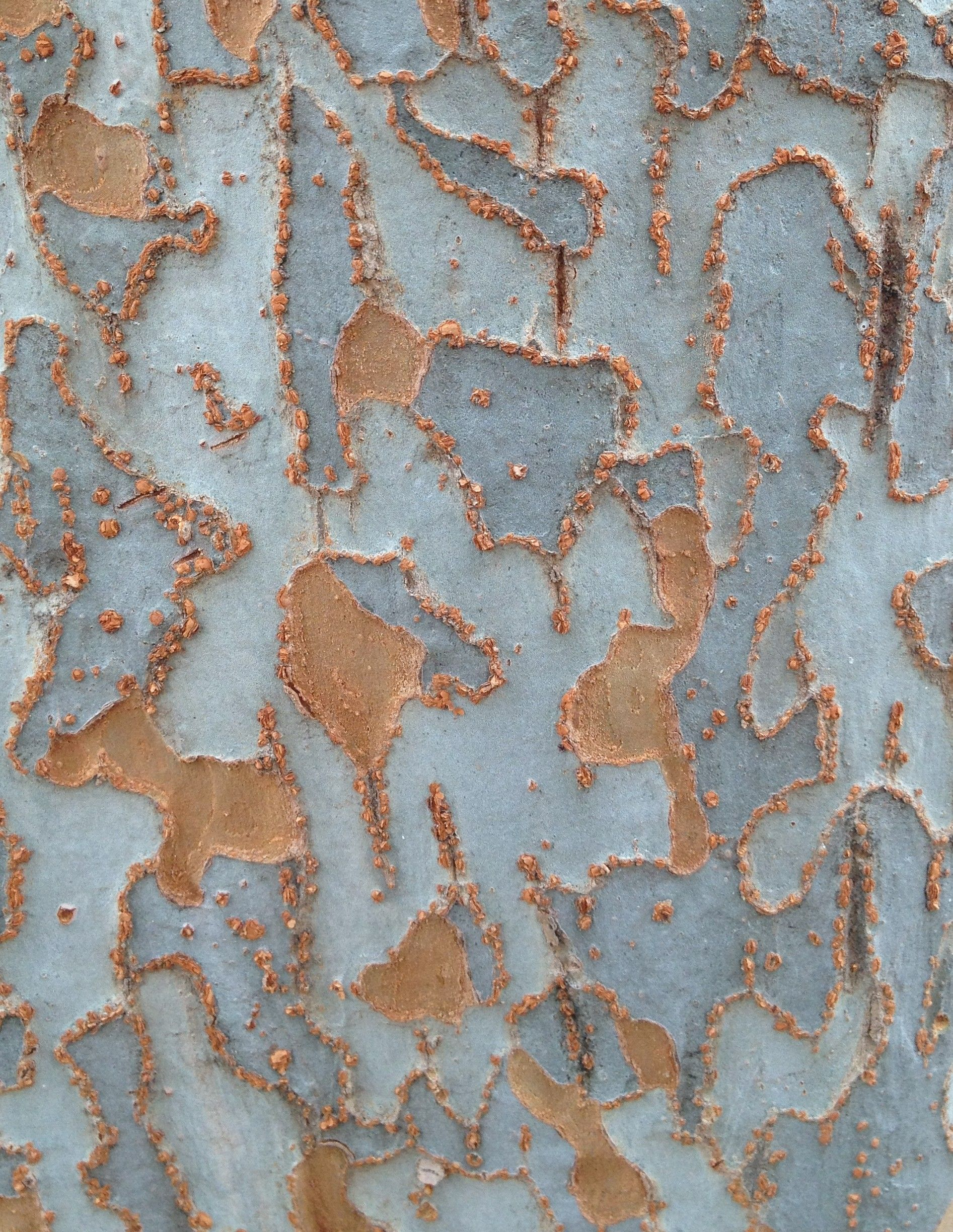 I\'m not sure what kind of tree this is. I\'ve recently developed an ...