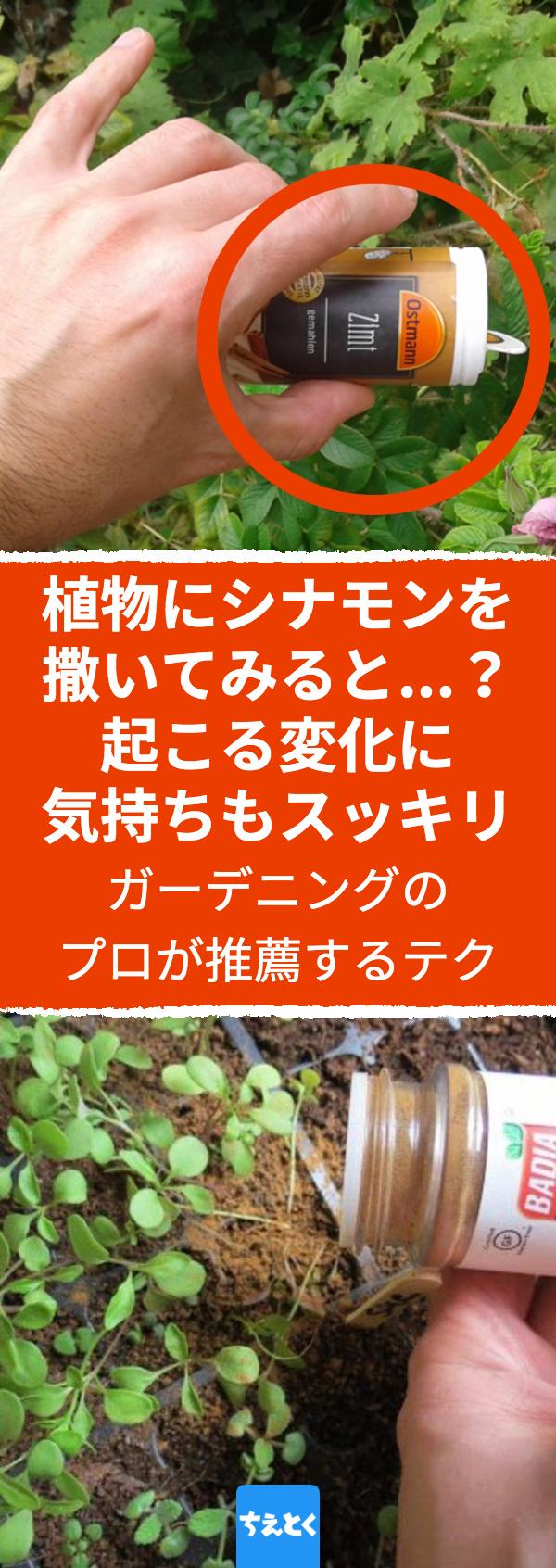 植物の害虫 カビ対策にシナモンパウダーを活用する 庭仕事のプロが支持する防虫 防カビの裏ワザ 植物 観葉植物 虫 害虫 庭 シナモン シナモンパウダー カビ お庭を維持するために 化学薬品を使って虫を駆除したりカビを撃退したりはしていませんか 実は