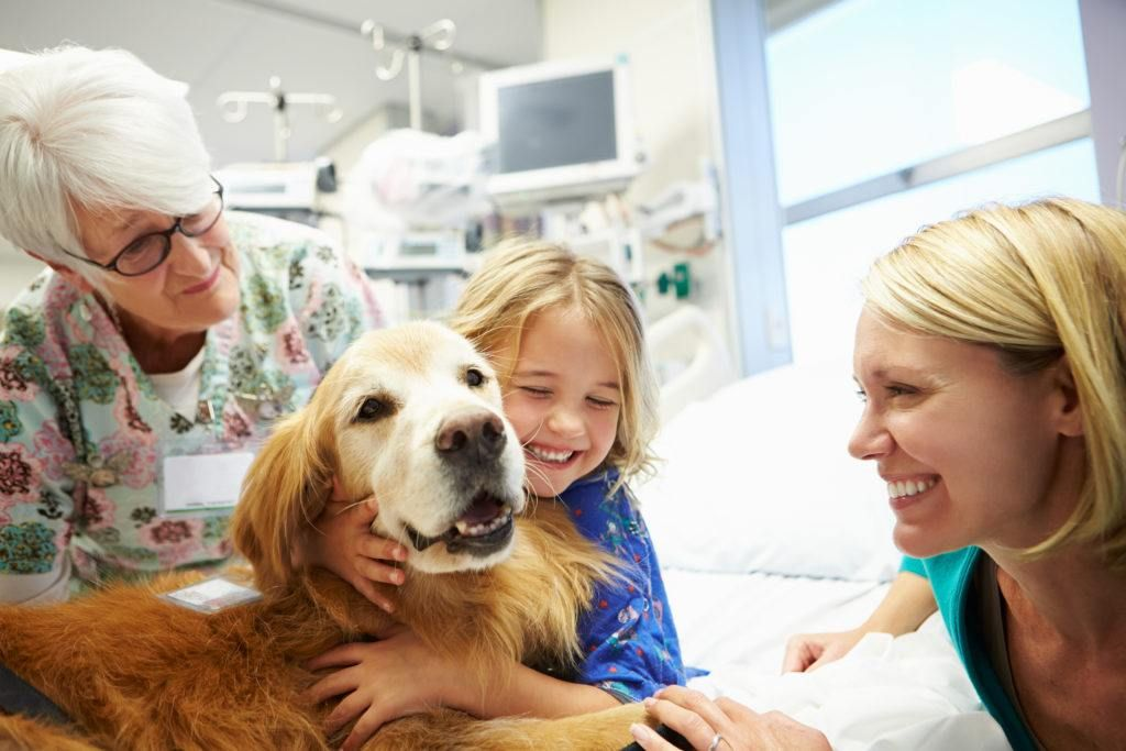 Privacy Policy Revv Fundraising Platform Therapy Dogs Service