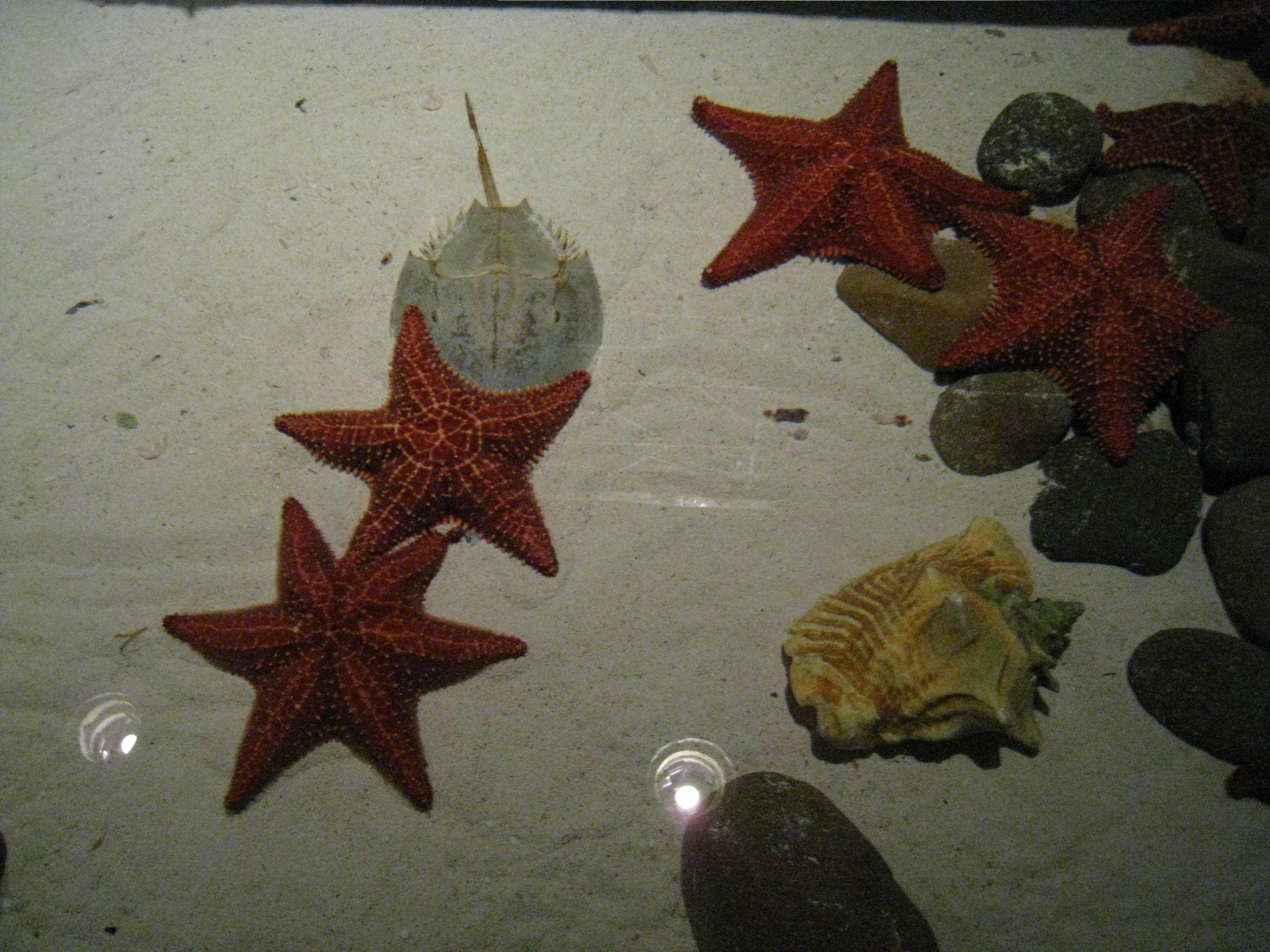 star fish, horse shoe crab