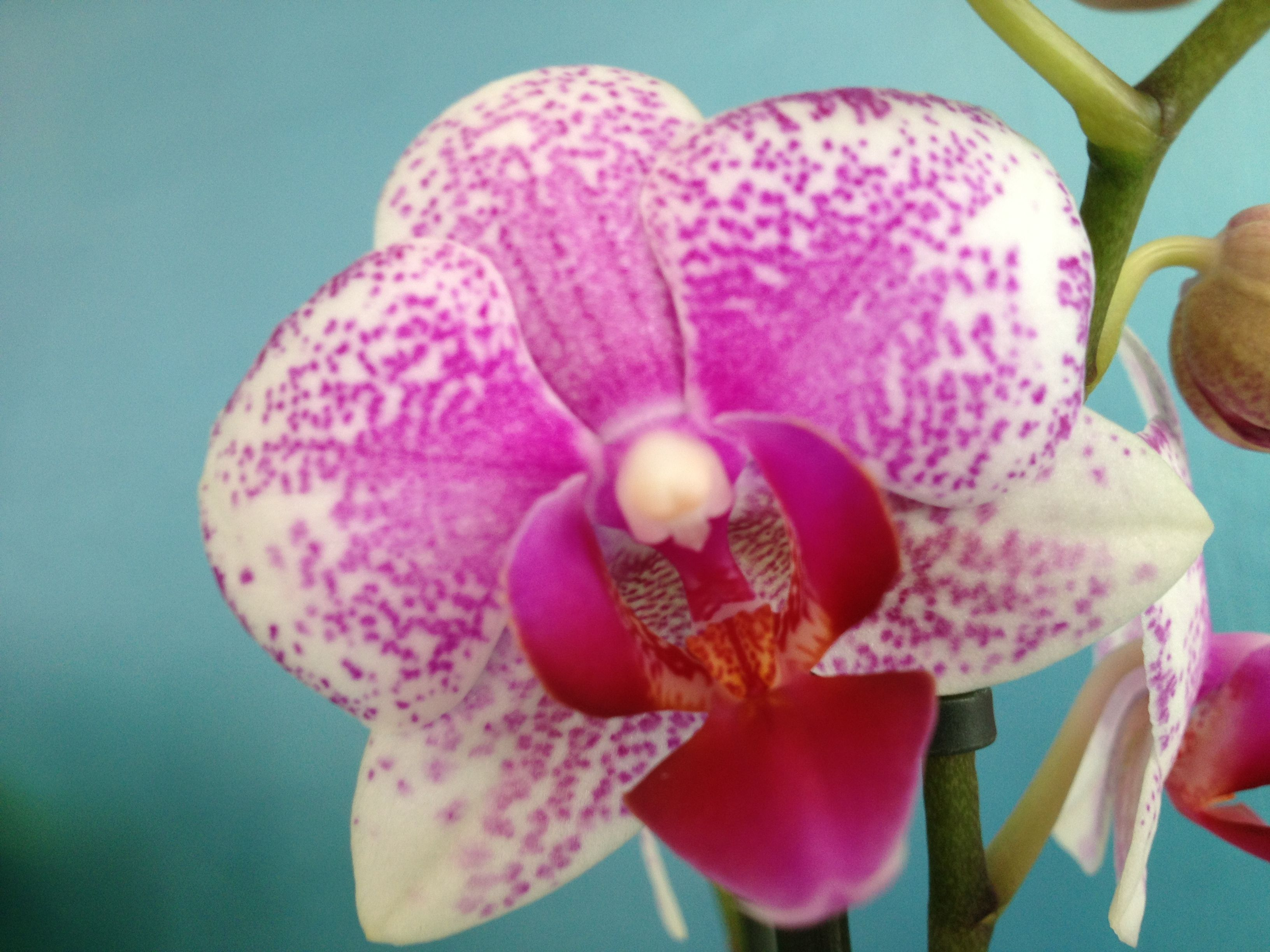 Beautiful orchid! www.floralist.nl