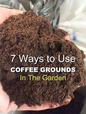 Gardening Tips For Lavender Amid Gardening Tips For Beginners